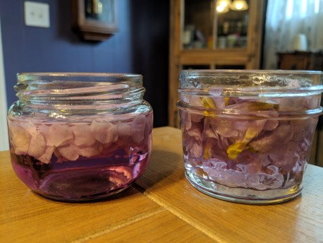 Two batches of violet vodka. To the left is a batch of only petals producing a vibrant purple. To the right is a dull lavender.