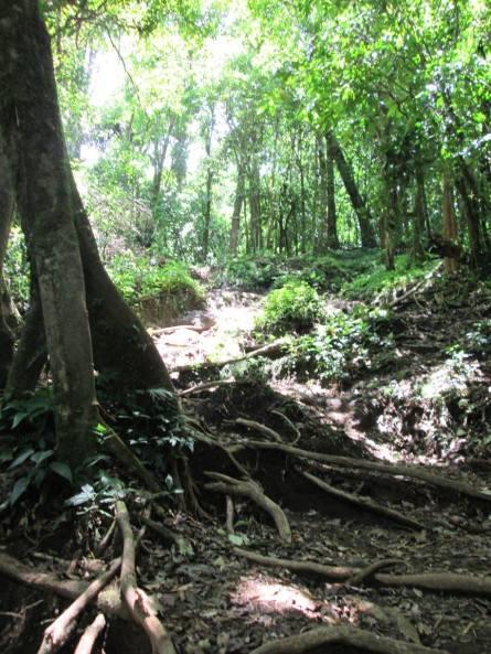 The Cerro Chato